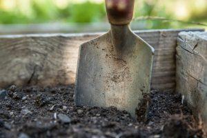 Gartenarbeit februar  Gartenarbeit - unsere Tipps für den Monat Februar