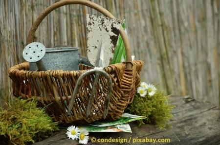 Gartentipps für den Monat Januar